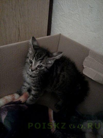 Найден кот ухоженный енок г.Москва