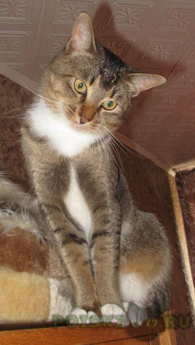 Пропал кот, 2, 5 года г.Москва