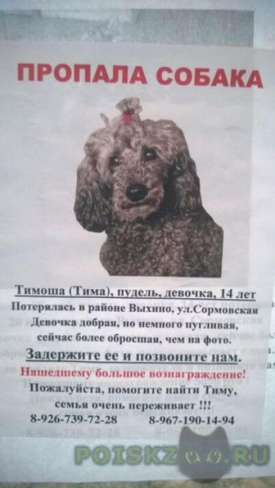 Пропала собака 20 июля г.Москва