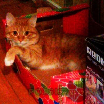 Пропал кот г.Оренбург