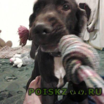 Пропала собака кобель любимец г.Новокузнецк