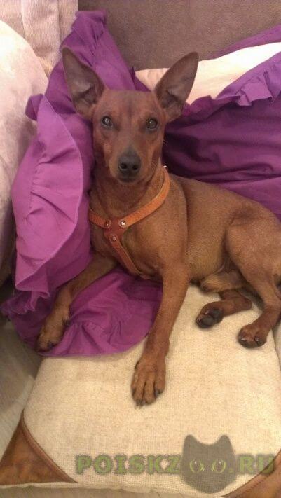 Найдена собака кобель г.Сургут