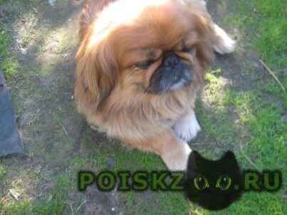 Пропала собака кобель г.Ярославль