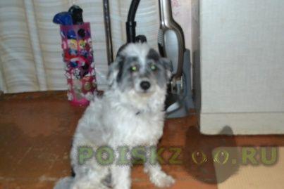 Пропала собака кобель китайская хохлатая г.Оренбург