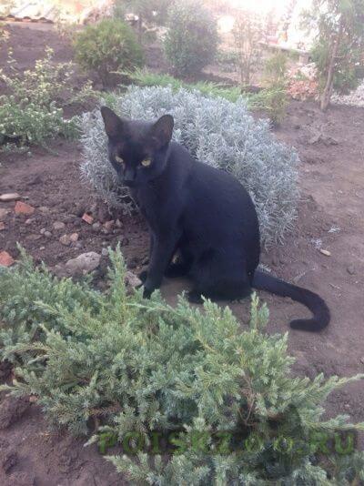 Пропал кот черный г.Краснодар