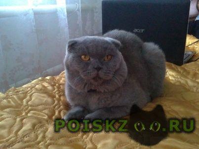 Пропал кот в западном е в районе ул.красноярской-молдавской г.Батайск