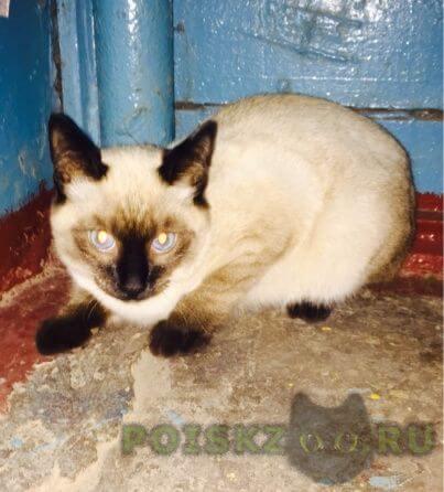 Найден кот г.Оренбург