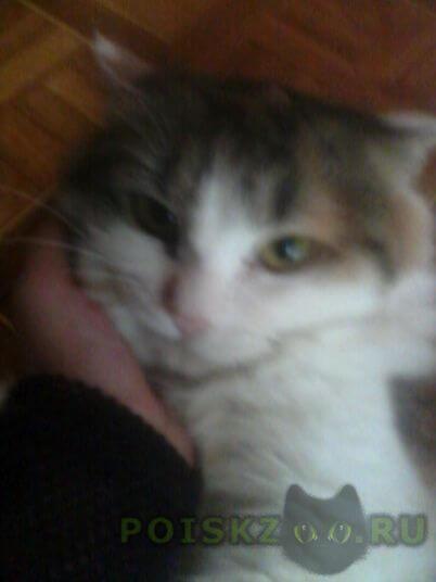Пропала кошка зовут печенька. г.Саратов