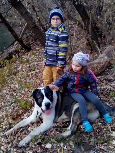 Пропала собака кобель г.Семилуки