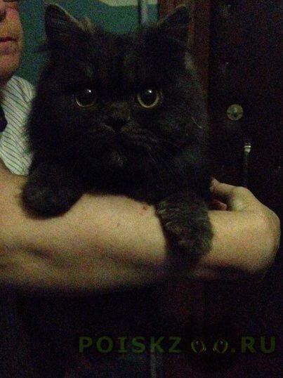 Найдена кошка г.Владимир
