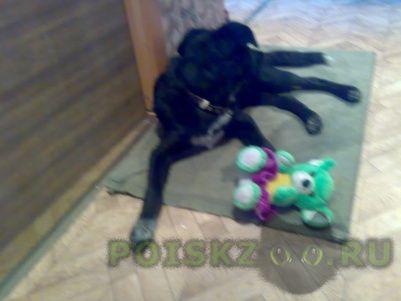 Найдена собака г.Псков