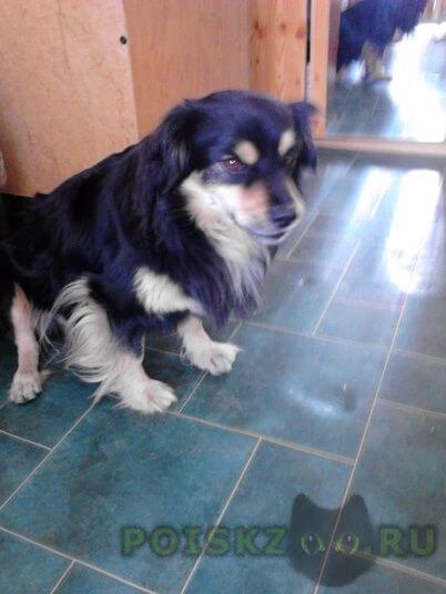 Пропала собака кобель г.Ханты-Мансийск