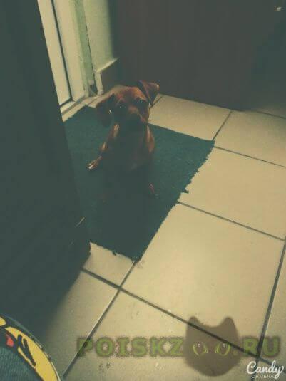 Пропала собака г.Таврическое