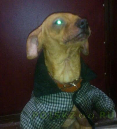 Найдена собака кобель г.Коломна