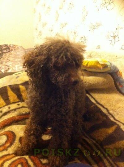 Найдена собака кобель г.Люберцы