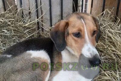 Найдена собака г.Сергиев Посад