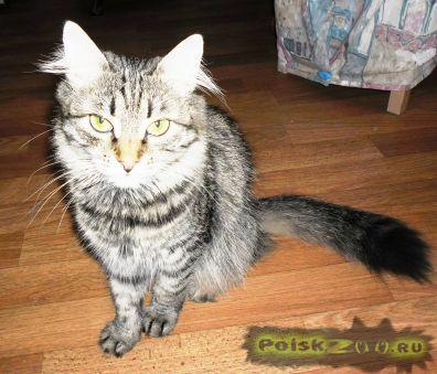 Пропала кошка г.Ростов-на-Дону