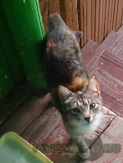 Найдена кошка кошечка ищет дом г.Зеленоград