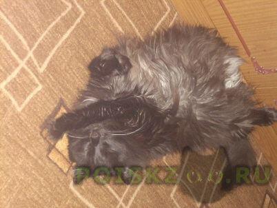 Пропал кот г.Новокузнецк
