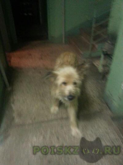 Найдена собака кобель г.Ногинск