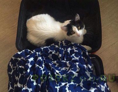 Пропало домашнее животное кот тишка г.Москва
