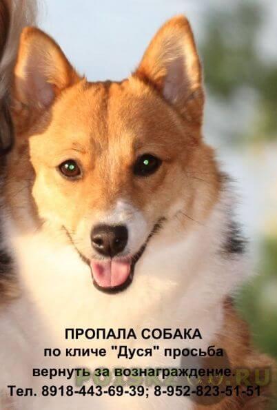 Пропала собака г.Геленджик