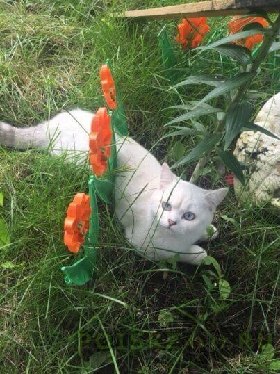 Пропал кот г.Щербинка