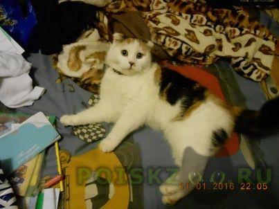 Найдена кошка г.Краснодар