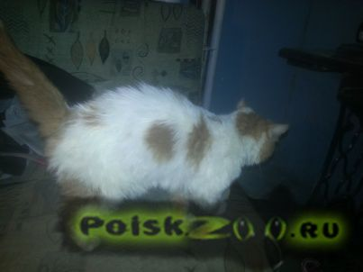 Найдена кошка г.Тула