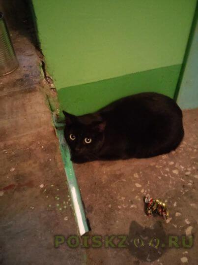 Найдена кошка г.Нижнекамск