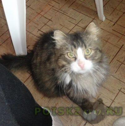 Найден кот на море г.Красноярск