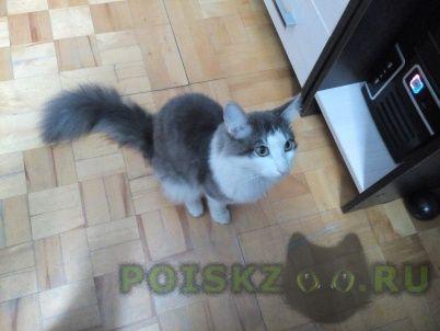 Найден кот г.Пермь