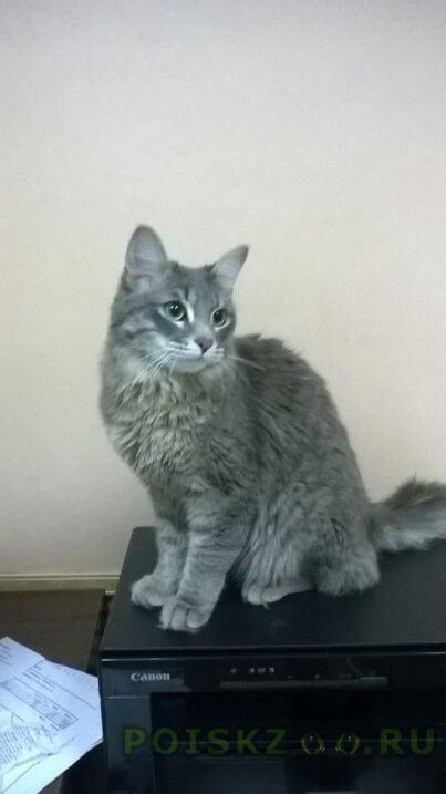 Найдена кошка найдет серый кот г.Оренбург