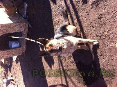 Пропала собака кобель помогите найти собаку г.Тверь