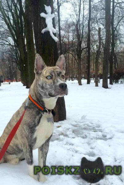 Пропала собака кобель г.Сочи
