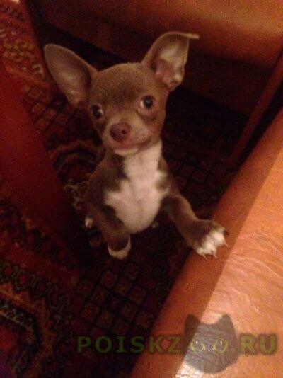 Пропала собака кобель щенок  г.Дзержинск