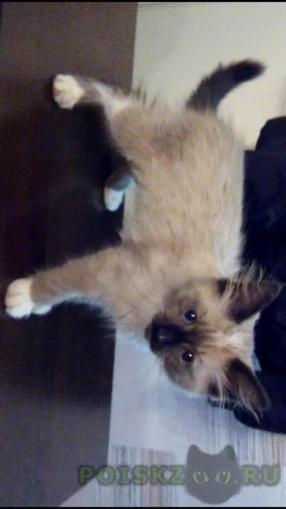 Найдена кошка котёнок г.Красноярск