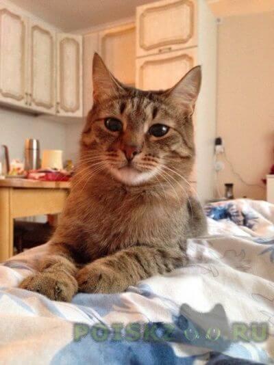 Пропал кот г.Челябинск