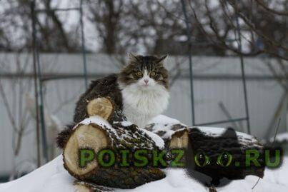 Пропал кот в юго-западном. ул. перхоровича г.Воронеж