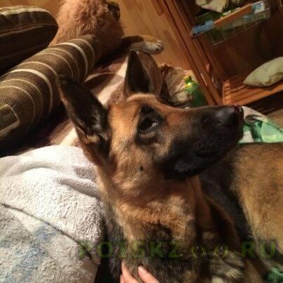 Найдена собака г.Челябинск