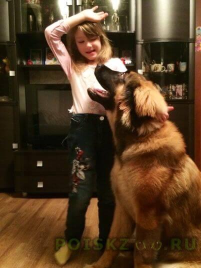 Пропала собака кобель г.Кингисепп
