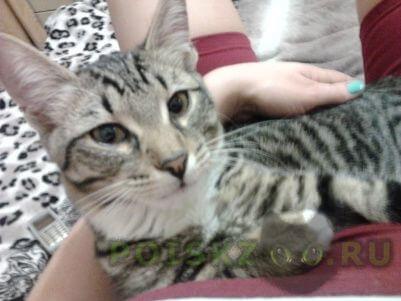 Пропала кошка кот 8 месяцев г.Самара