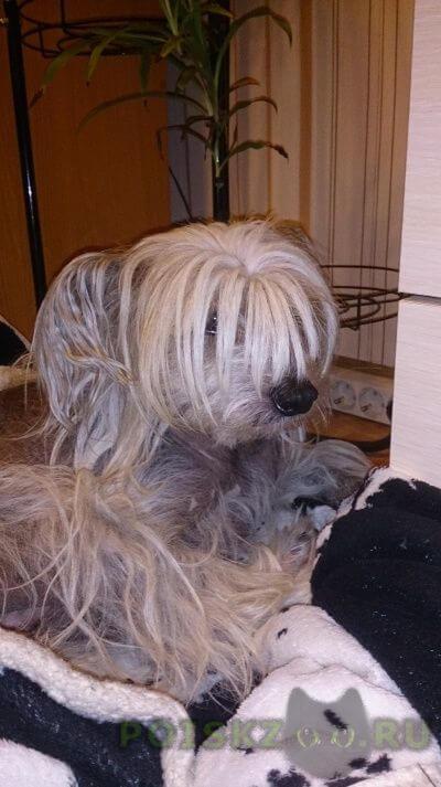 Найдена собака кобель г.Тверь