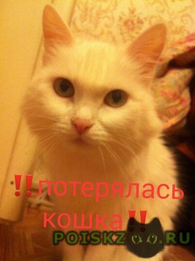 Пропала кошка потеряли белую кошку северный г.Красноярск