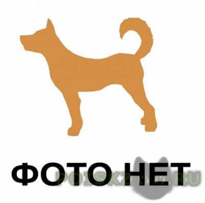 Пропала собака кобель г.Гатчина