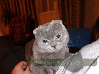 Пропал кот г.Среднеуральск