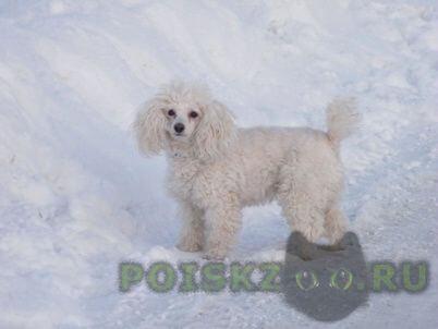 Пропала собака г.Архангельск