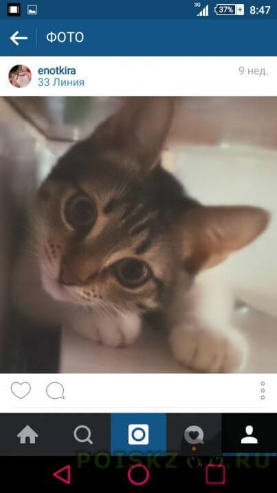 Пропала кошка помогите найти  г.Ростов-на-Дону