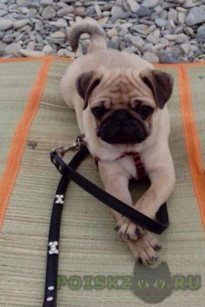 Пропала собака кобель г.Краснодар