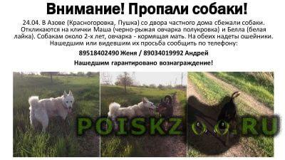 Пропала собака две собаки г.Азов